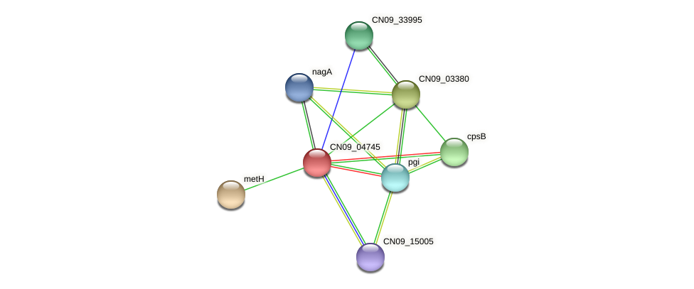 CN09_04745 protein (Agrobacterium rhizogenes) - STRING interaction network