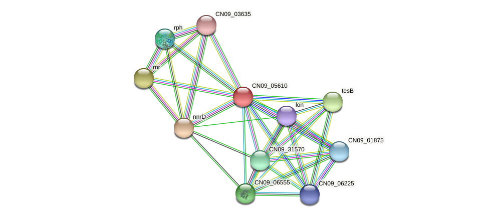 CN09_05610 protein (Agrobacterium rhizogenes) - STRING interaction network