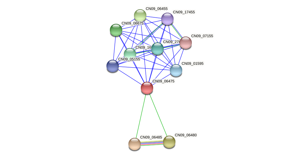 CN09_06475 protein (Agrobacterium rhizogenes) - STRING interaction network