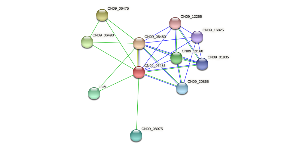 CN09_06485 protein (Agrobacterium rhizogenes) - STRING interaction network