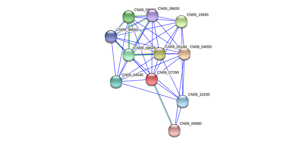 CN09_07290 protein (Agrobacterium rhizogenes) - STRING interaction network
