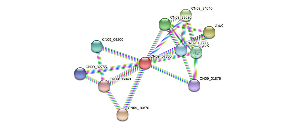 CN09_07360 protein (Agrobacterium rhizogenes) - STRING interaction network