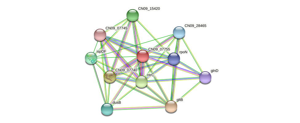 CN09_07755 protein (Agrobacterium rhizogenes) - STRING interaction network