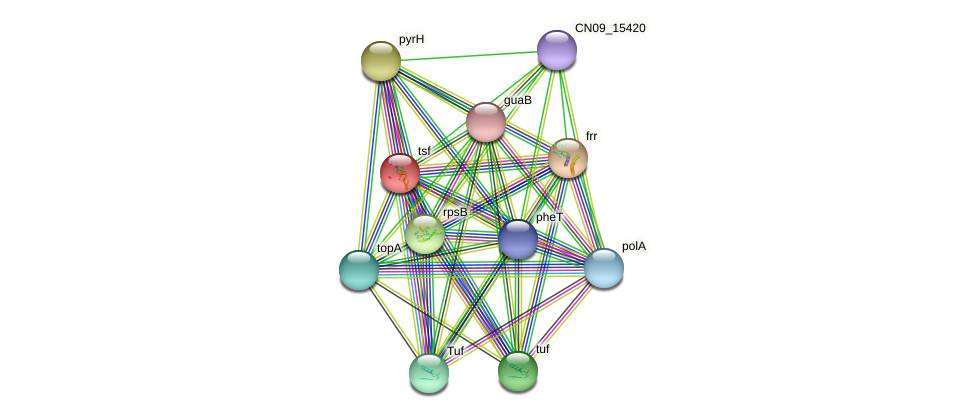 tsf protein (Agrobacterium rhizogenes) - STRING interaction network
