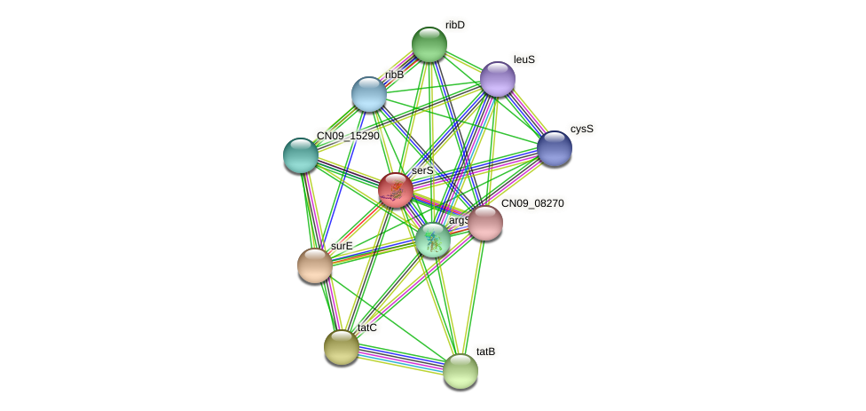 serS protein (Agrobacterium rhizogenes) - STRING interaction network