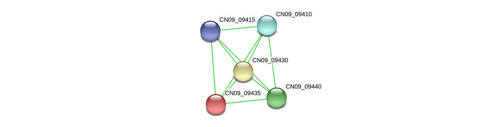 CN09_09435 protein (Agrobacterium rhizogenes) - STRING interaction network