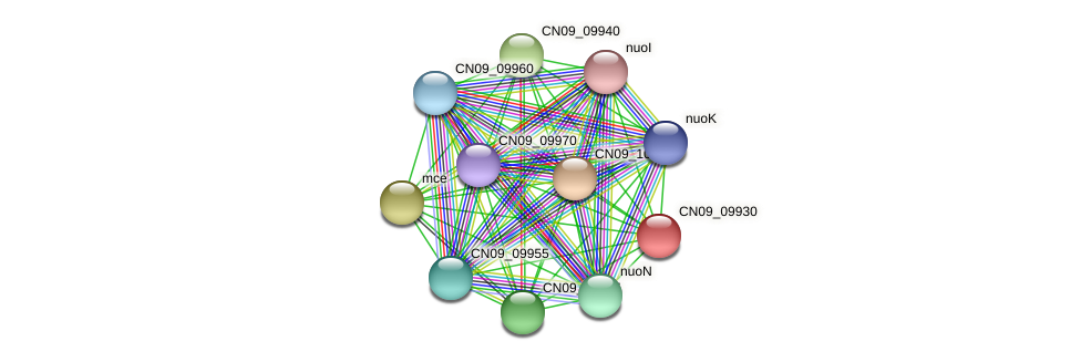 CN09_09930 protein (Agrobacterium rhizogenes) - STRING interaction network