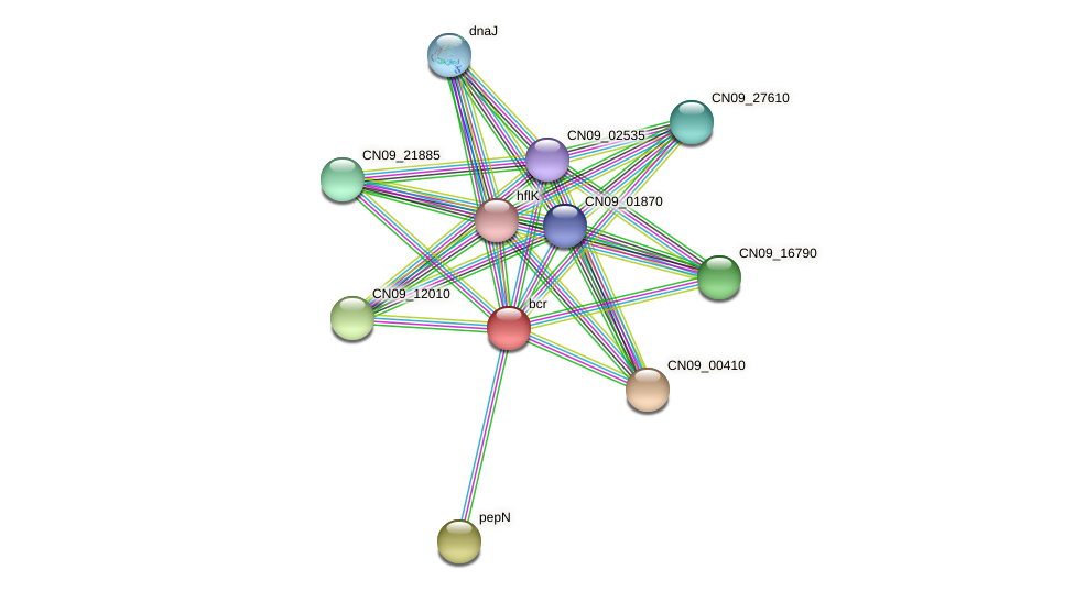 CN09_10175 protein (Agrobacterium rhizogenes) - STRING interaction network