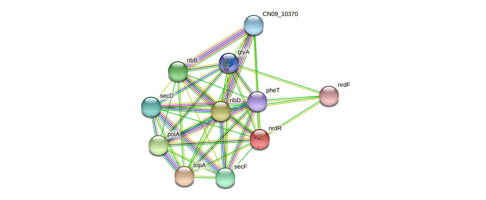 nrdR protein (Agrobacterium rhizogenes) - STRING interaction network