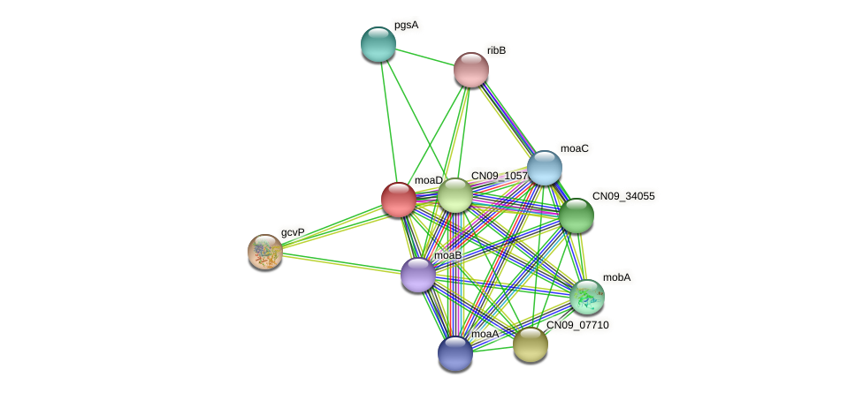 moaD protein (Agrobacterium rhizogenes) - STRING interaction network