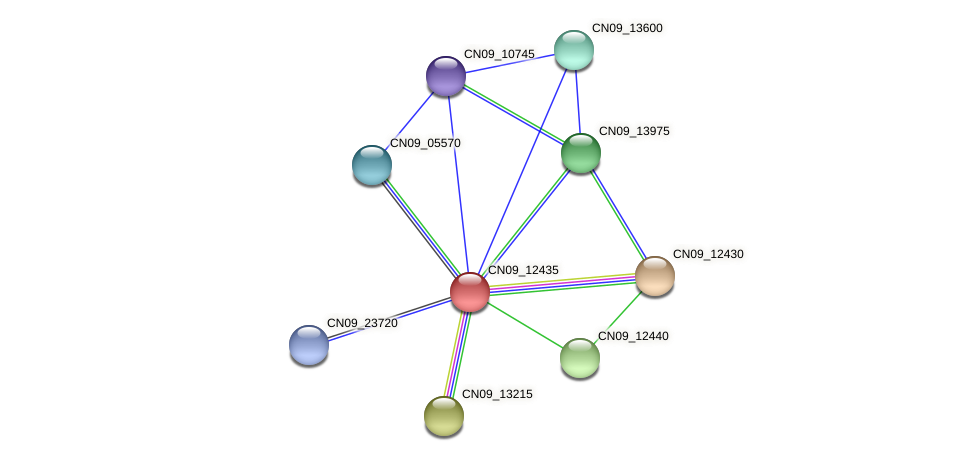 CN09_12435 protein (Agrobacterium rhizogenes) - STRING interaction network