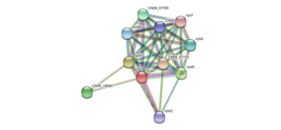 cysD protein (Agrobacterium rhizogenes) - STRING interaction network