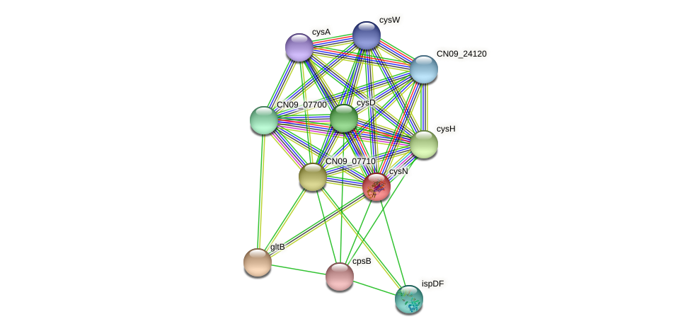 cysN protein (Agrobacterium rhizogenes) - STRING interaction network