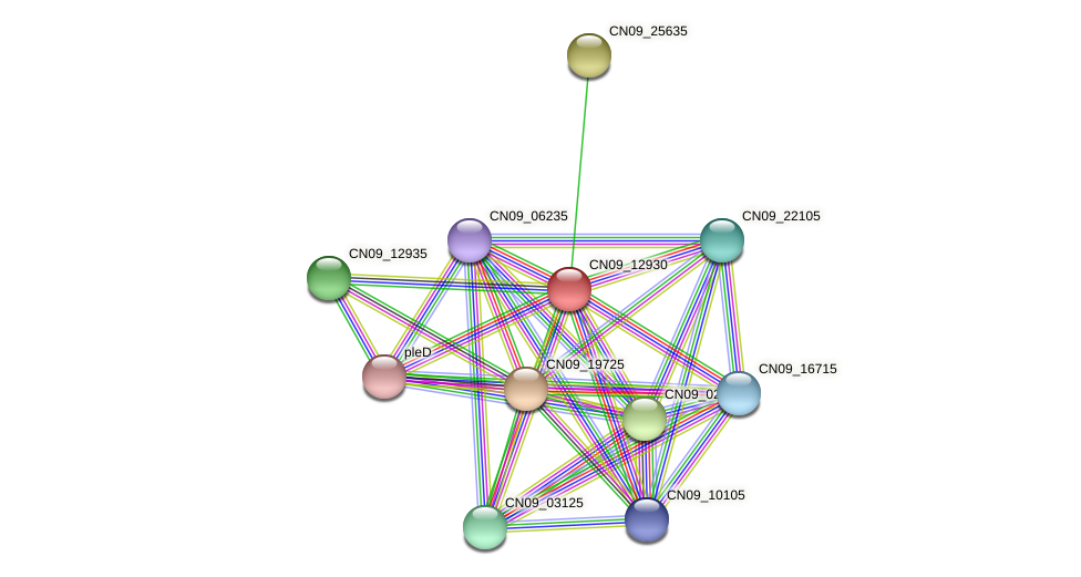 CN09_12930 protein (Agrobacterium rhizogenes) - STRING interaction network