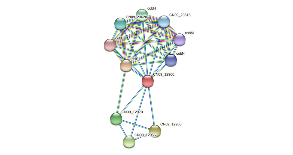 CN09_12960 protein (Agrobacterium rhizogenes) - STRING interaction network