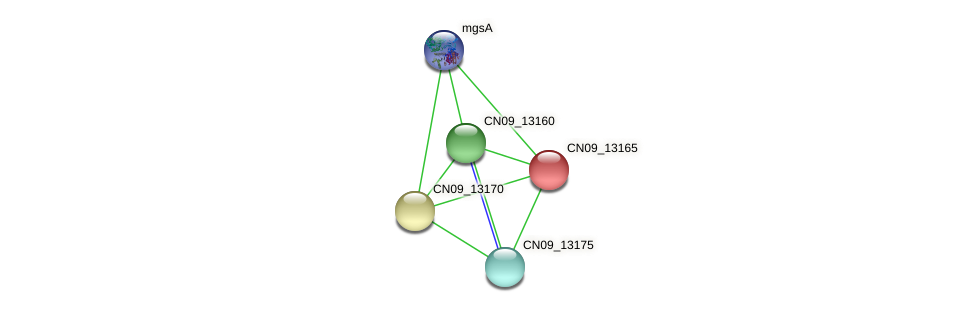 CN09_13165 protein (Agrobacterium rhizogenes) - STRING interaction network