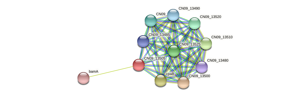 CN09_13505 protein (Agrobacterium rhizogenes) - STRING interaction network
