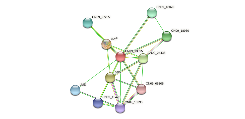 CN09_13595 protein (Agrobacterium rhizogenes) - STRING interaction network