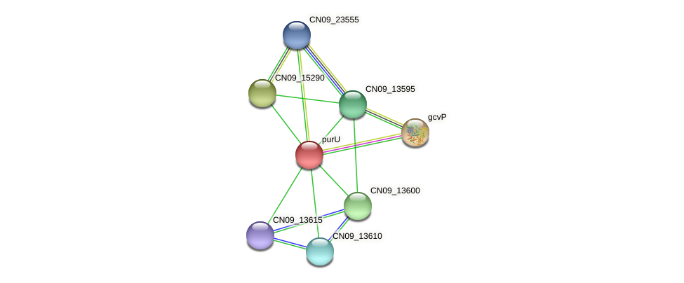 CN09_13605 protein (Agrobacterium rhizogenes) - STRING interaction network