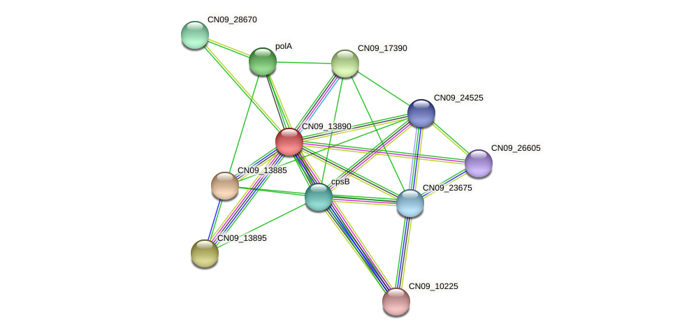 CN09_13890 protein (Agrobacterium rhizogenes) - STRING interaction network