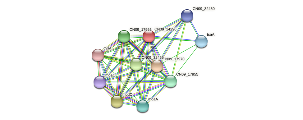 CN09_14290 protein (Agrobacterium rhizogenes) - STRING interaction network