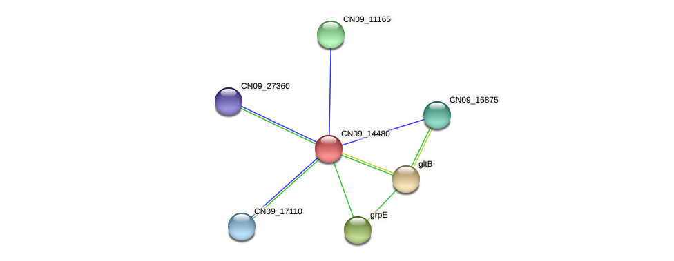 CN09_14480 protein (Agrobacterium rhizogenes) - STRING interaction network