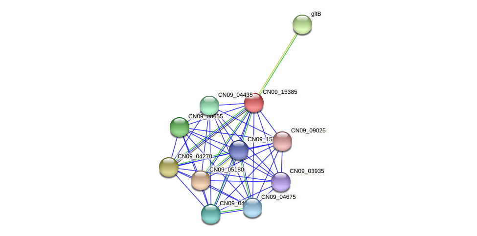 CN09_15385 protein (Agrobacterium rhizogenes) - STRING interaction network