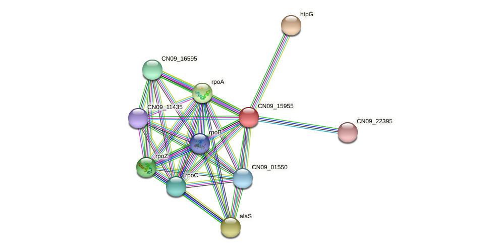 CN09_15955 protein (Agrobacterium rhizogenes) - STRING interaction network