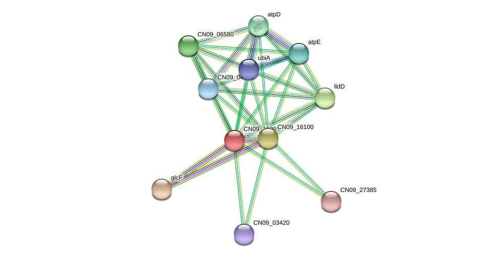 CN09_16095 protein (Agrobacterium rhizogenes) - STRING interaction network