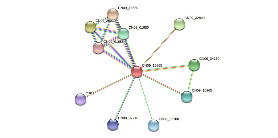 CN09_16665 protein (Agrobacterium rhizogenes) - STRING interaction network