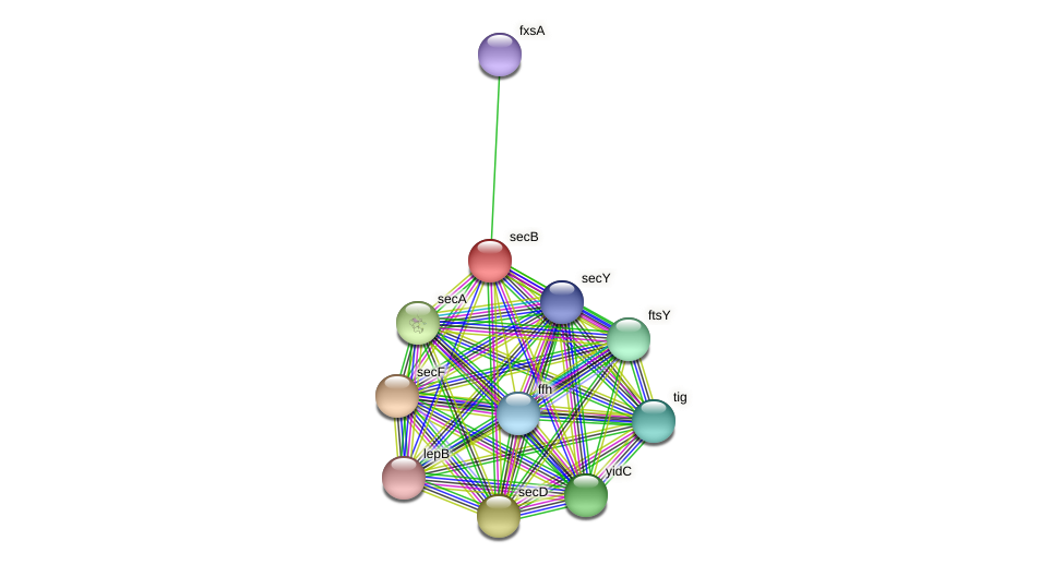 secB protein (Agrobacterium rhizogenes) - STRING interaction network