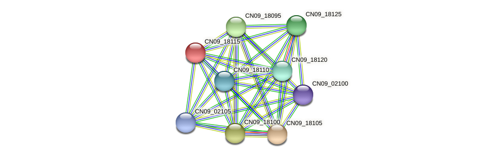 CN09_18115 protein (Agrobacterium rhizogenes) - STRING interaction network