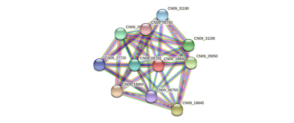 CN09_18840 protein (Agrobacterium rhizogenes) - STRING interaction network