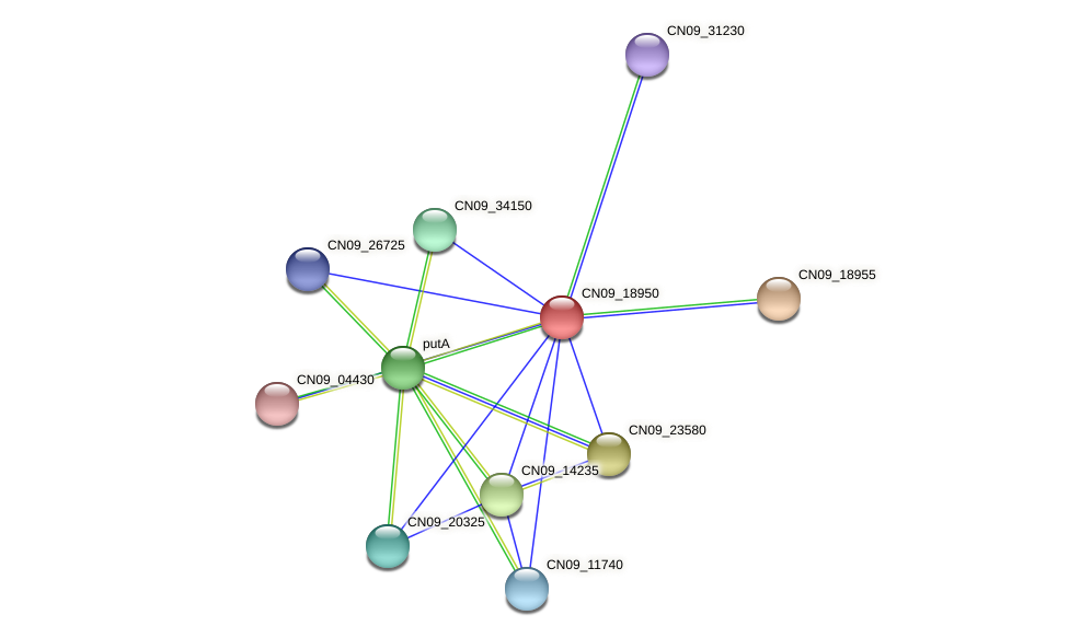 CN09_18950 protein (Agrobacterium rhizogenes) - STRING interaction network