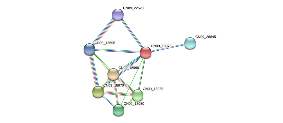 CN09_18975 protein (Agrobacterium rhizogenes) - STRING interaction network
