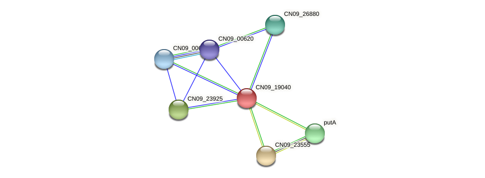 CN09_19040 protein (Agrobacterium rhizogenes) - STRING interaction network