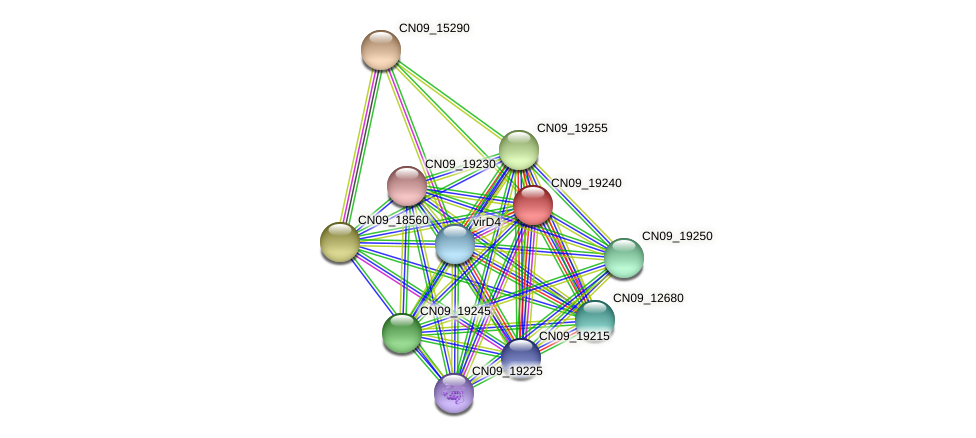 CN09_19240 protein (Agrobacterium rhizogenes) - STRING interaction network