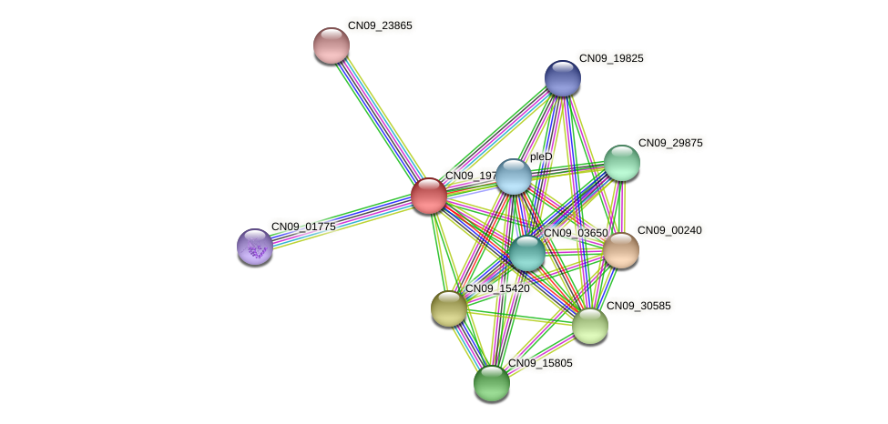 CN09_19780 protein (Agrobacterium rhizogenes) - STRING interaction network
