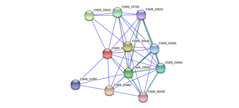 CN09_20220 protein (Agrobacterium rhizogenes) - STRING interaction network