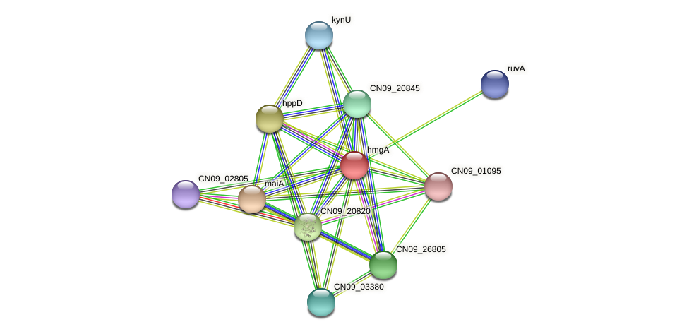hmgA protein (Agrobacterium rhizogenes) - STRING interaction network