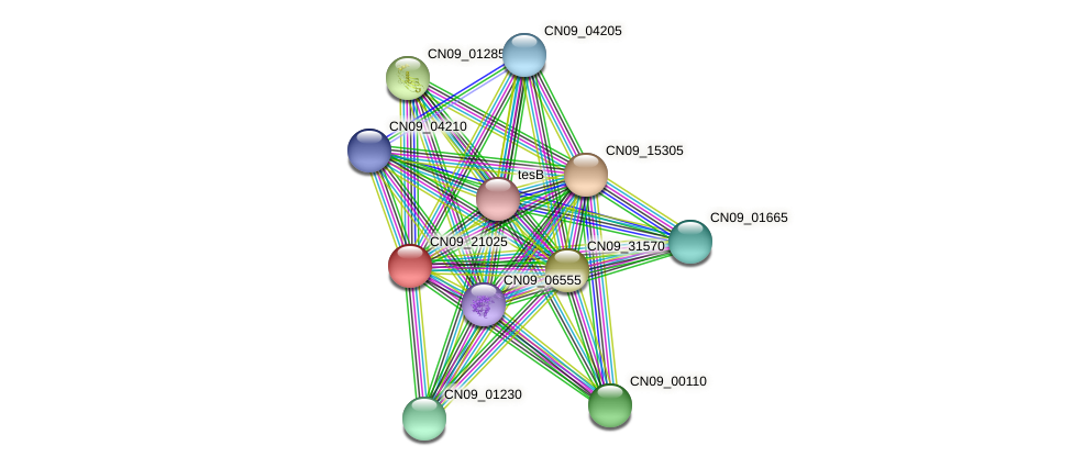 CN09_21025 protein (Agrobacterium rhizogenes) - STRING interaction network