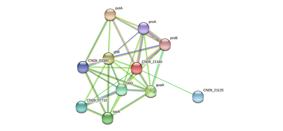CN09_21340 protein (Agrobacterium rhizogenes) - STRING interaction network