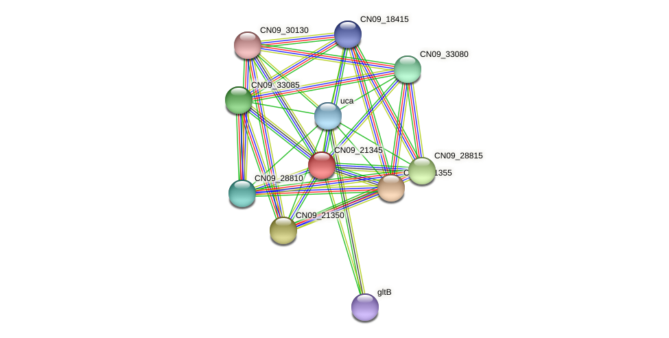 CN09_21345 protein (Agrobacterium rhizogenes) - STRING interaction network