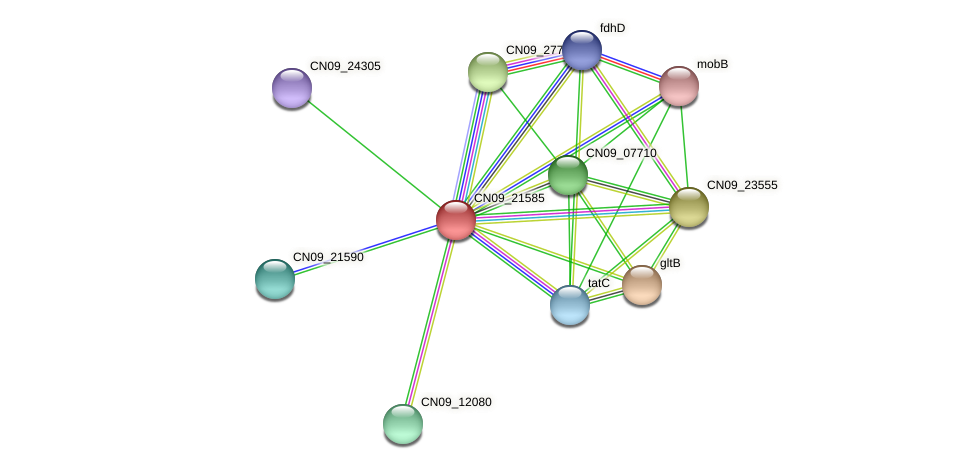 CN09_21585 protein (Agrobacterium rhizogenes) - STRING interaction network