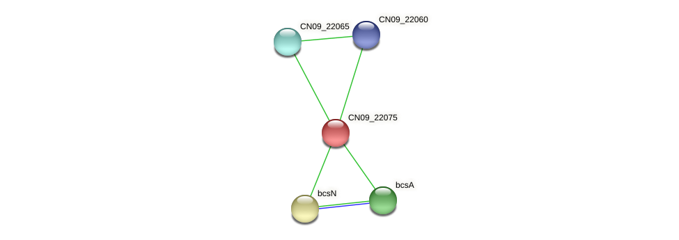 CN09_22075 protein (Agrobacterium rhizogenes) - STRING interaction network