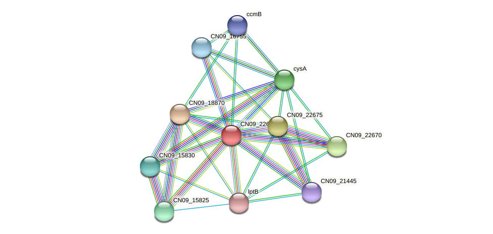 CN09_22665 protein (Agrobacterium rhizogenes) - STRING interaction network