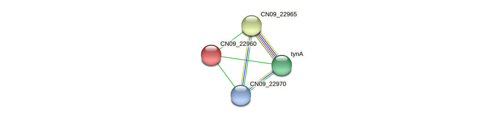 CN09_22960 protein (Agrobacterium rhizogenes) - STRING interaction network