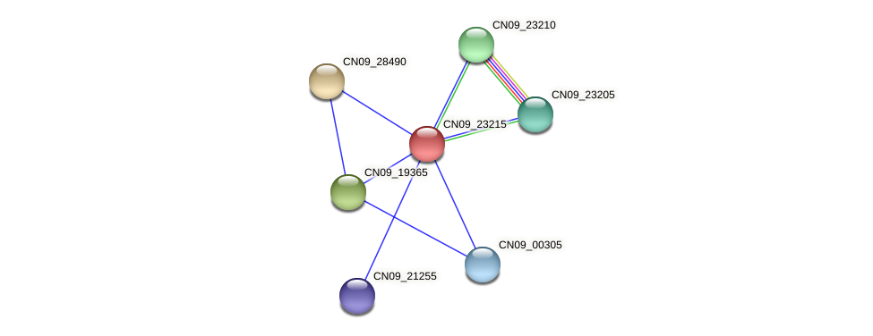 CN09_23215 protein (Agrobacterium rhizogenes) - STRING interaction network