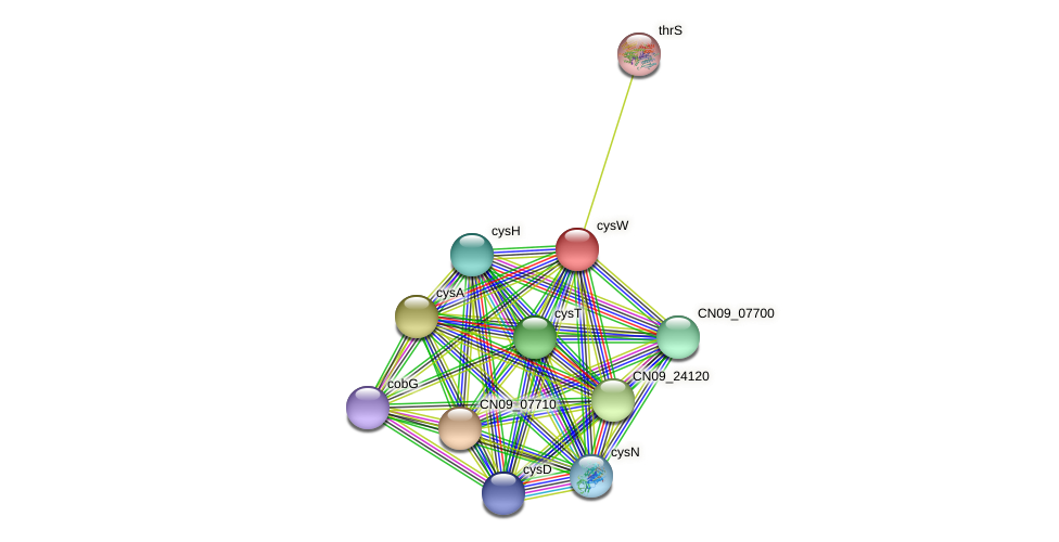 cysW protein (Agrobacterium rhizogenes) - STRING interaction network