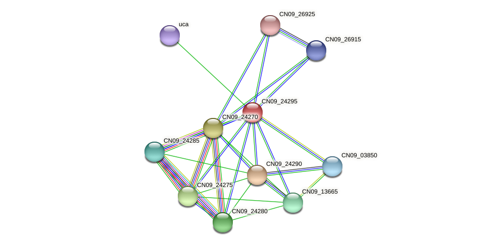 CN09_24295 protein (Agrobacterium rhizogenes) - STRING interaction network